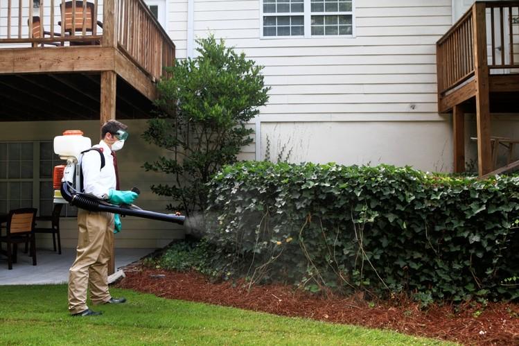 come eliminare le zanzare