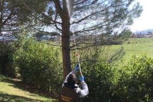 come-eliminare-i-nidi-di-processionaria 2