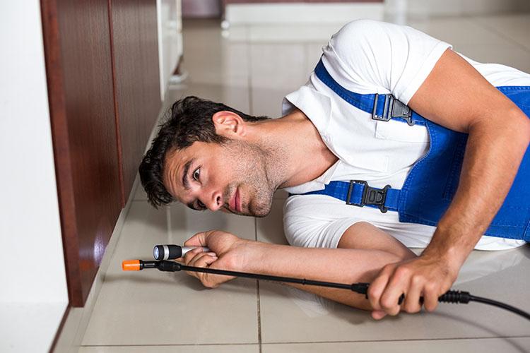 Scarafaggi in cucina quando intervenire e come disinfestazioni roma - Invasione di formiche in cucina ...