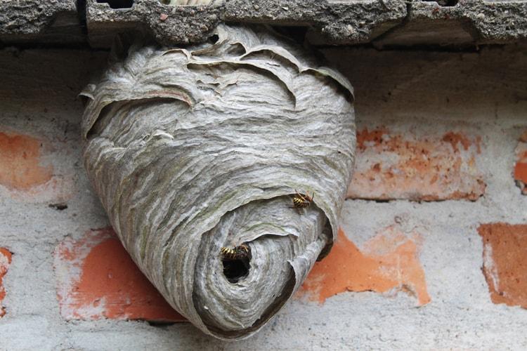 Come togliere un nido di vespe