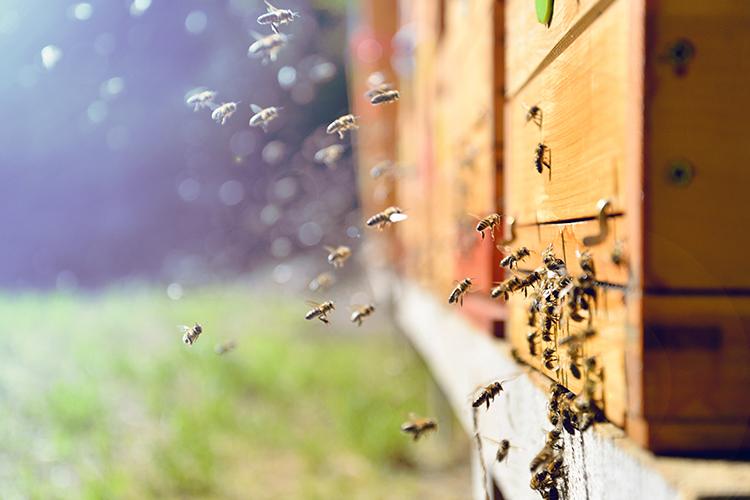 emergenza api roma