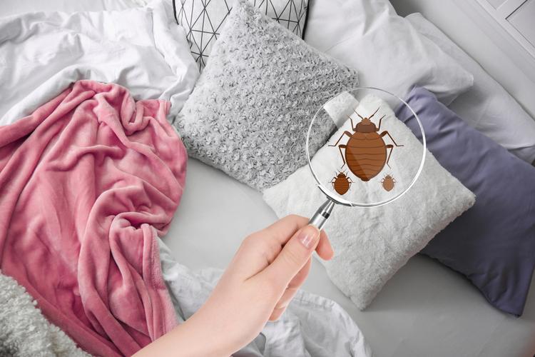 Punture cimici da letto