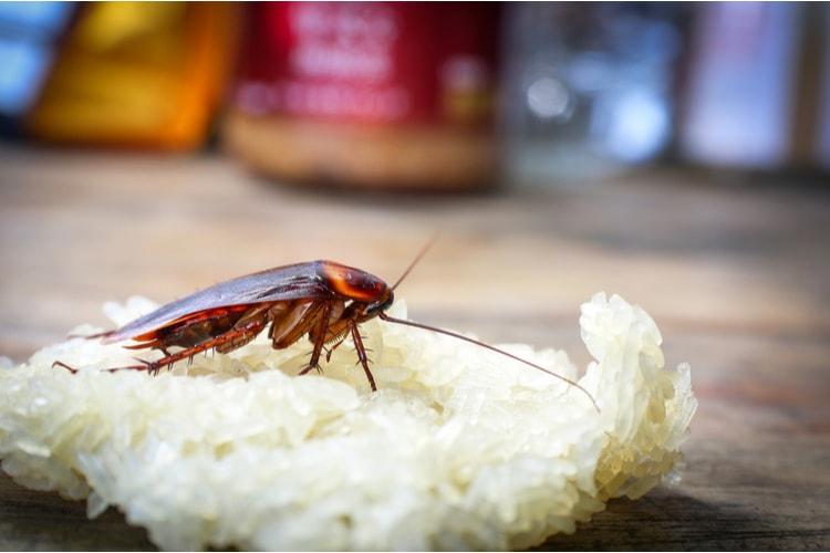 Tipi di scarafaggi