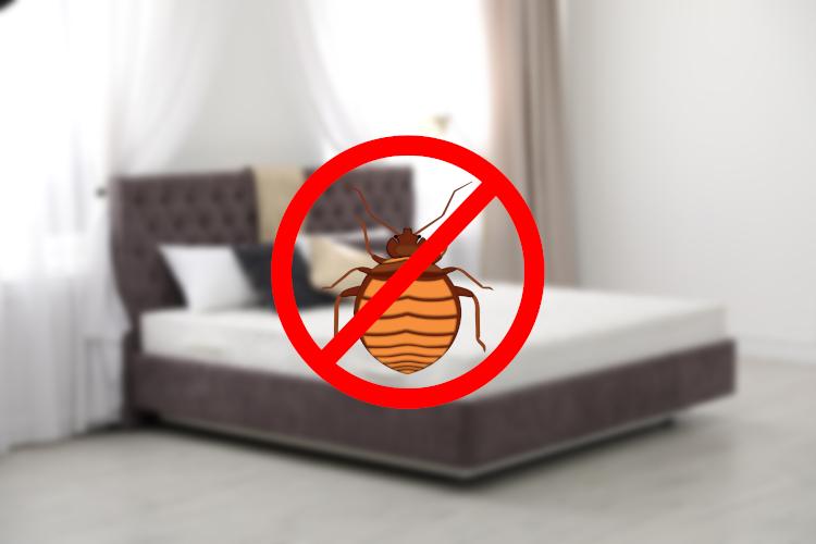 come eliminare cimici da letto