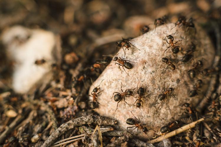 disinfestazione formiche nel giardino