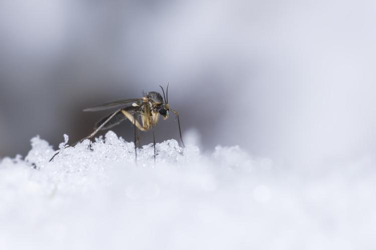 cosa fanno gli insetti in inverno