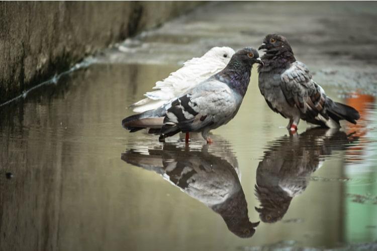 Malattie degli uccelli trasmessibili all'uomo