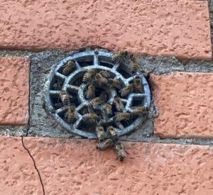 nido-di-vespe