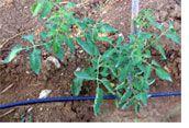 Impianti di microirrigazione roma for Programmatore irrigazione orto